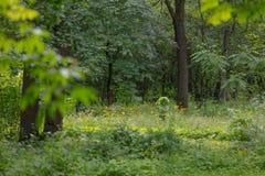 Прогулка в ботаническом саде стоковые изображения