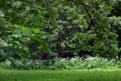 Прогулка в ботаническом саде стоковое изображение