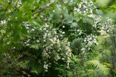 Прогулка в ботаническом саде стоковые фото