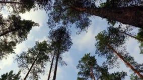 Прогулка в отснятом видеоматериале движения forestSlow лета съемка steadicam акции видеоматериалы