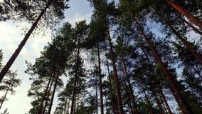 Прогулка в отснятом видеоматериале движения forestSlow лета съемка steadicam видеоматериал