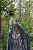Прогулка в долине Giants, западная Австралия верхней части дерева Стоковое Фото