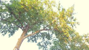 Прогулка вдоль улицы съемка steadicam цветы landscape красный заход солнца живой Деревья и небо видеоматериал