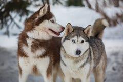 Прогулка в парке в зиме Стоковое Фото