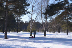Прогулка в древесинах зимы Стоковые Фотографии RF