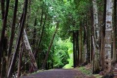 Прогулка в древесинах Стоковое Изображение