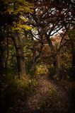 Прогулка в древесинах Стоковые Фотографии RF