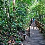 Прогулка леса - Сингапур Стоковые Изображения RF