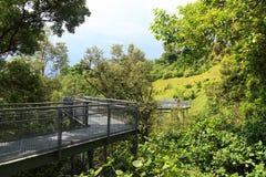 Прогулка леса тропического леса парка холма Telok Blangah Стоковое Изображение