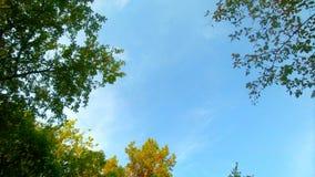 Прогулка лета Стоковое Изображение RF