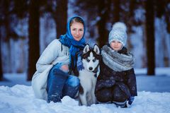 Прогулка зимы с лайкой стоковые фото