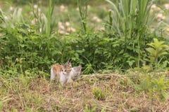 Прогулка и игра кота Стоковое Фото