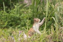 Прогулка и игра кота Стоковое фото RF