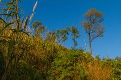 Прогулка к верхней части горы Стоковое Изображение