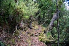 Прогулка национального парка Te Urewera Стоковое Изображение RF