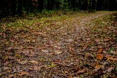 Прогулка осени Стоковые Изображения RF