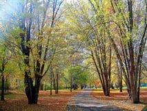 Прогулка осени Стоковое Изображение