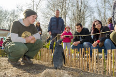 Прогулка пингвина в зоопарке Стоковые Изображения