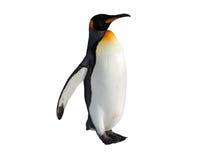 Прогулка пингвина изолированная на белой предпосылке Стоковое Изображение RF