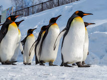 Прогулка пингвина на снеге Стоковые Фото