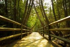 Прогулка природы в древесинах Стоковое Изображение