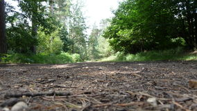 Прогулка пущи Стоковые Фото