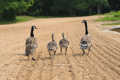 Прогулка семьи на пляже Стоковое фото RF