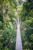 Прогулка сени через тропический лес стоковые изображения