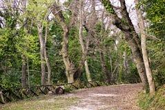 Прогулка сельской местности Стоковые Фотографии RF