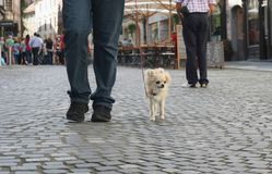 Прогулка собаки города Стоковые Фотографии RF