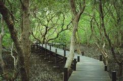 Прогулка тропы через лес мангровы стоковое изображение rf