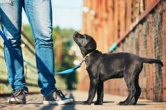 Прогулка утра с собакой Стоковые Изображения