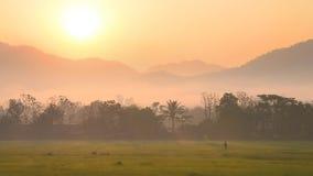 Прогулка фермера силуэта в зеленом поле на утреннем времени сток-видео