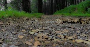 Прогулка через лес Стоковые Изображения RF