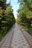 Прогулка через зеленые переулки Стоковые Фотографии RF