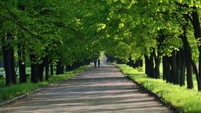 Прогулка через парк весны видеоматериал