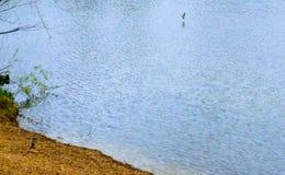 Прогулка через парк Стоковые Фотографии RF