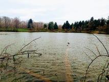 Прогулка через парк Стоковые Изображения RF