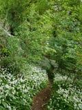 Прогулка через древесины Стоковые Изображения