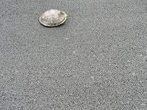 Прогулка черепахи на бетоне асфальта Стоковое Фото