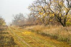Прогулка для грибов в лесе осени стоковое изображение rf