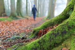 Прогулка Forrest Стоковые Фотографии RF