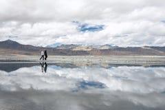 2 прогулки путешественников приближают к озеру Tso Kar в горе Гималаев Стоковые Изображения