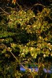 Прогулки сельской местности Чешира стоковые изображения