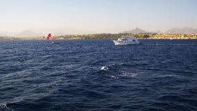 Прогулочный катер плавает на волны Красного Моря на предпосылке побережья и пляжей в Египте сток-видео