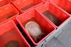 Продажа черепахи в реальном маштабе времени для супа черепахи стоковые изображения