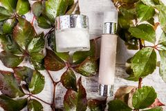 Продукты бутылки курорта косметические на белых деревянных листьях предпосылки и зеленого цвета предусматриванных в падениях свеж Стоковые Фото