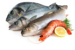 продукты моря Стоковые Фотографии RF