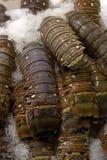 продукты моря 2 рынков Стоковые Изображения
