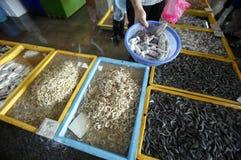 продукты моря Стоковые Изображения RF